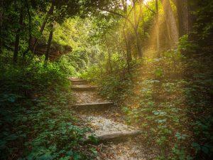 greenforest Psychotherapie